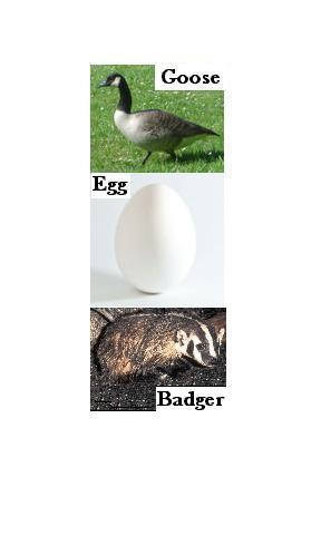 Cover art for Goose, Egg, Badger